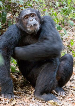 The Skanner News - American Student Hospitalized After Chimp