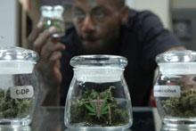 150326 marijuana regulation full