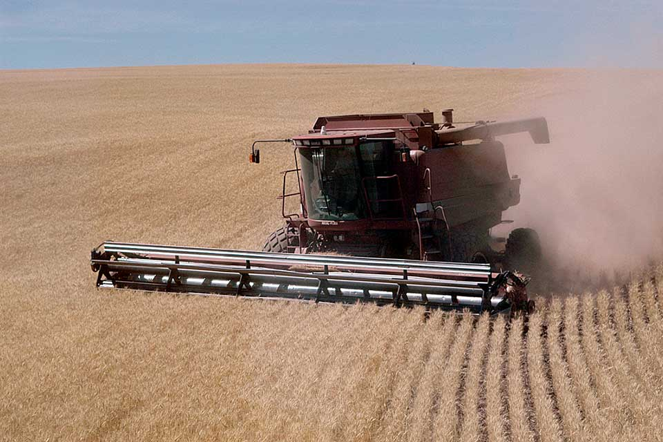 combine and wheat