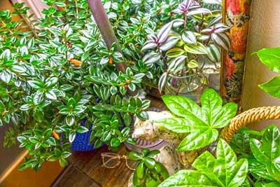dr.jasmine plants med