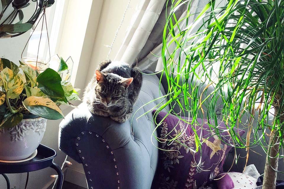 Dr. Jasmine's tabby cat in sunny window