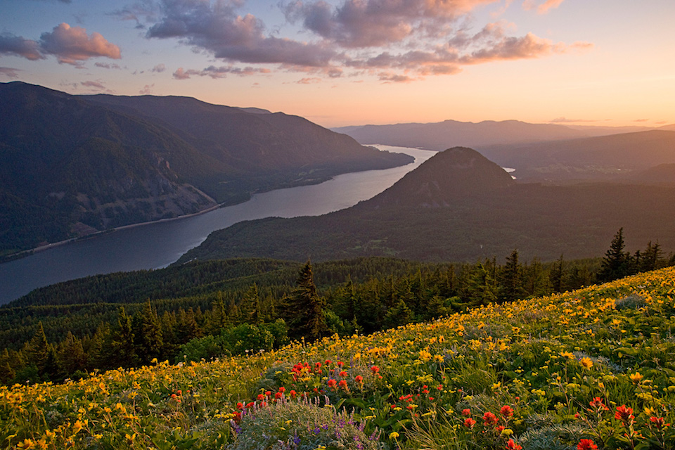Wildflowers glow during last light on Dog Mountain