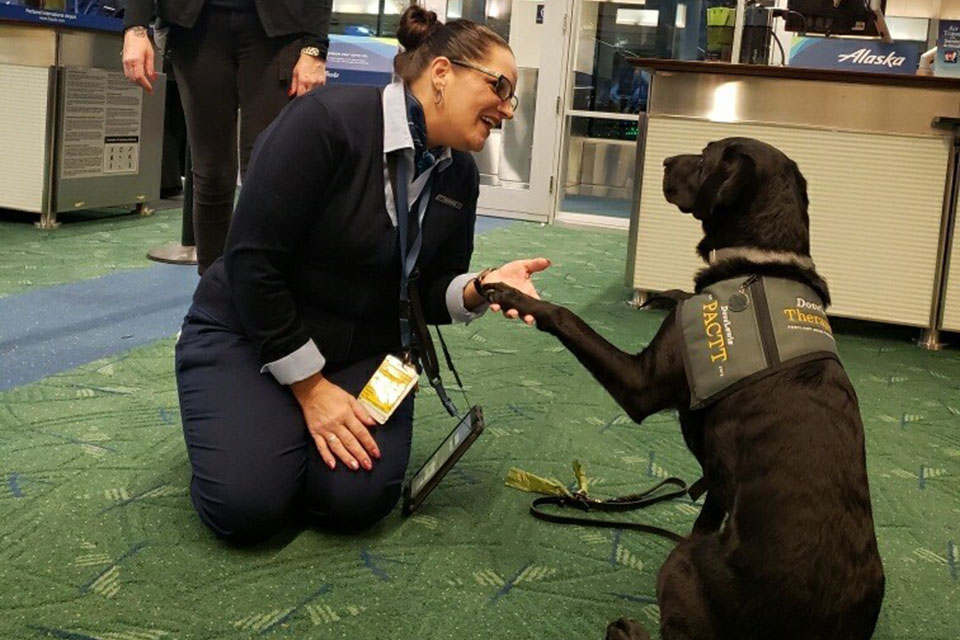 comfort dog at pdx airport