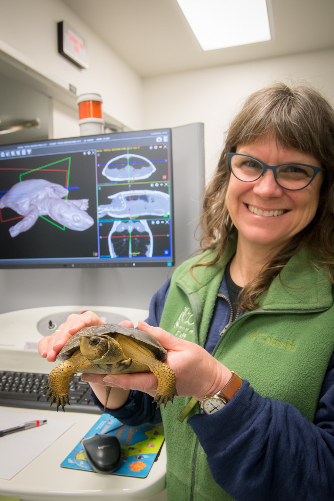 oregon zoo vet turtle