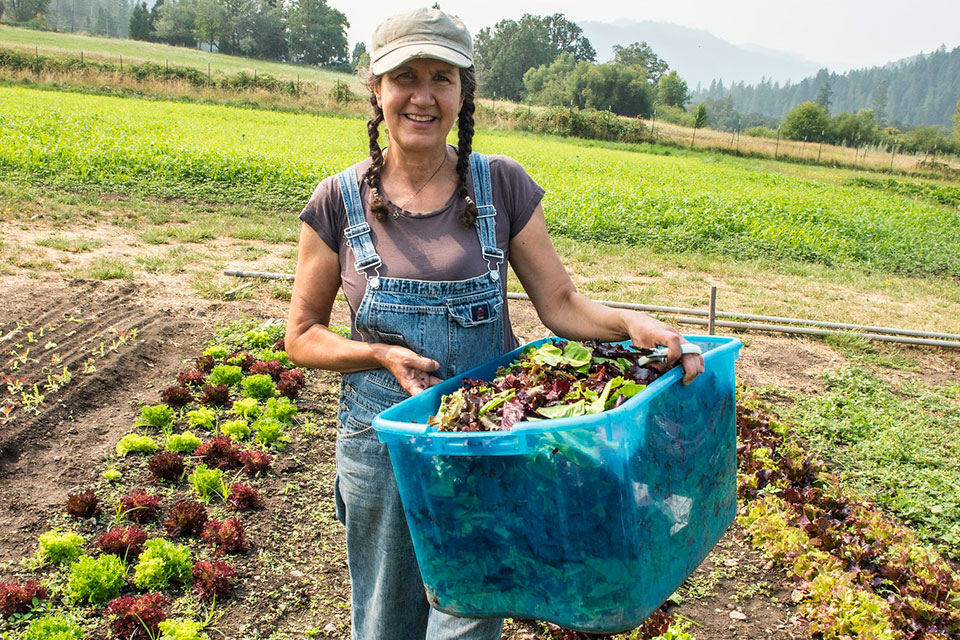 Tina Arapalu harvests lettuce at her Easy Valley Farm. Workshops and conferences from Oregon State University Extension Service helped her get her business up and running
