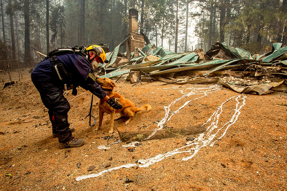 Keith Davis, a member of Washington Task Force One Search and Rescue squad, directs Asher while conducting operations Tuesday, Sept. 15, 2020, in Blue River, Ore., in areas affected by the Holiday Farm Fire. (Andy Nelson/The Register-Guard via AP, Pool)