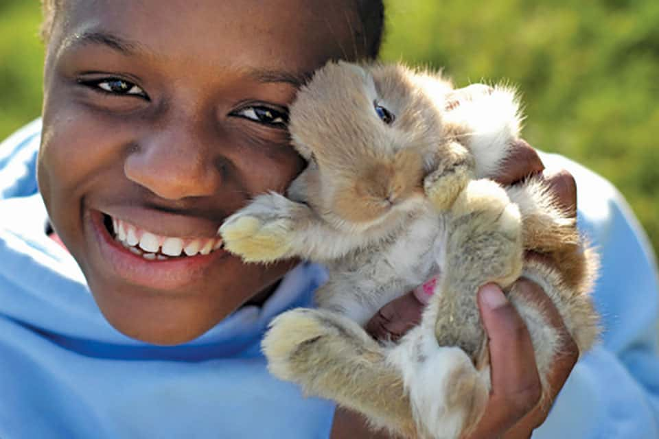 boy and bunny