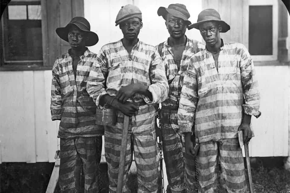 Convicts leased to harvest timber in Florida around 1915.